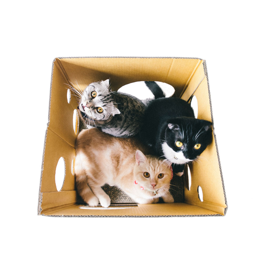 CUBE CLASSY CAT Sticker