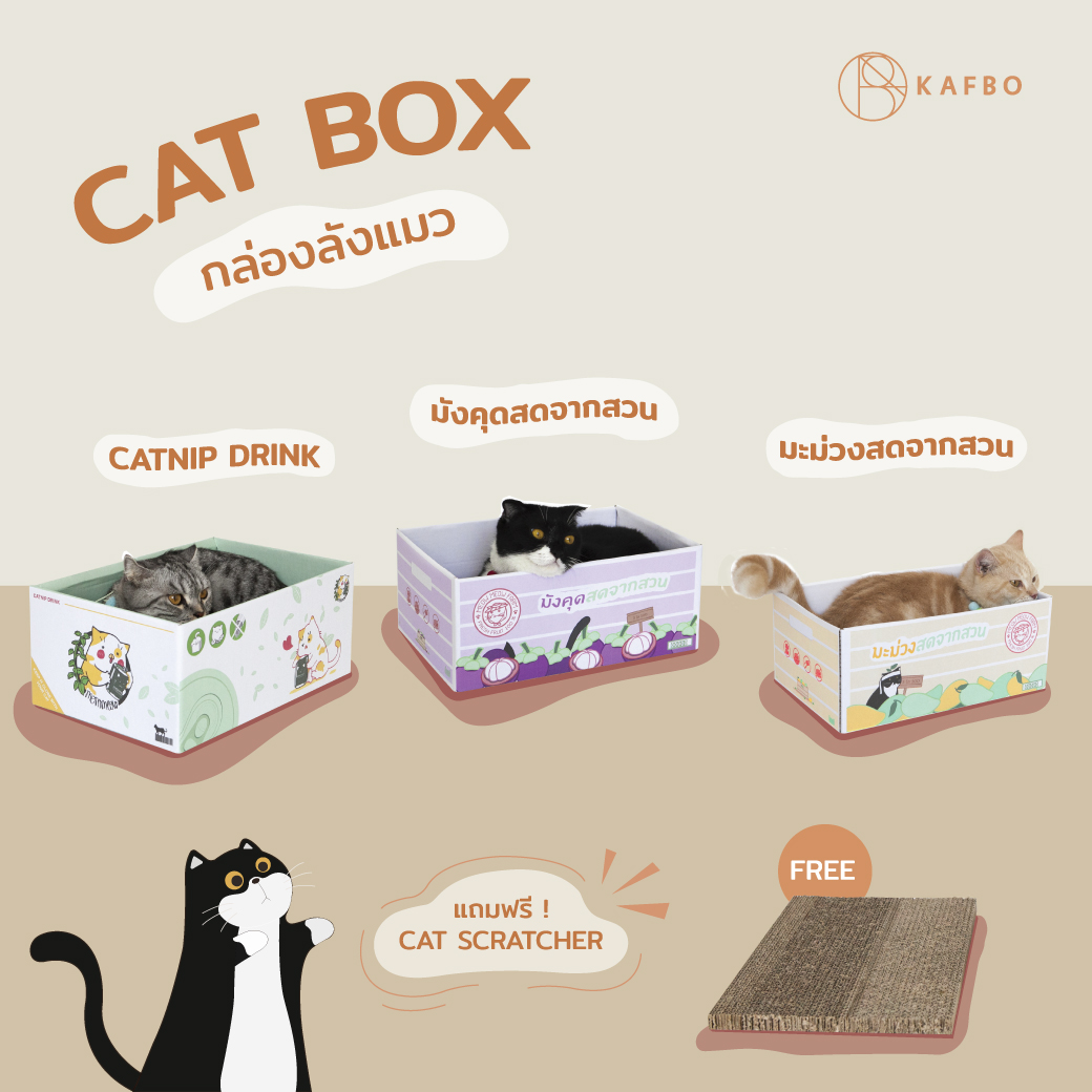 Cat box Mangosteen